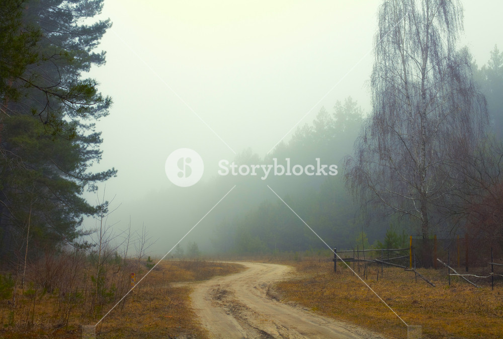Rural road in a misty morning