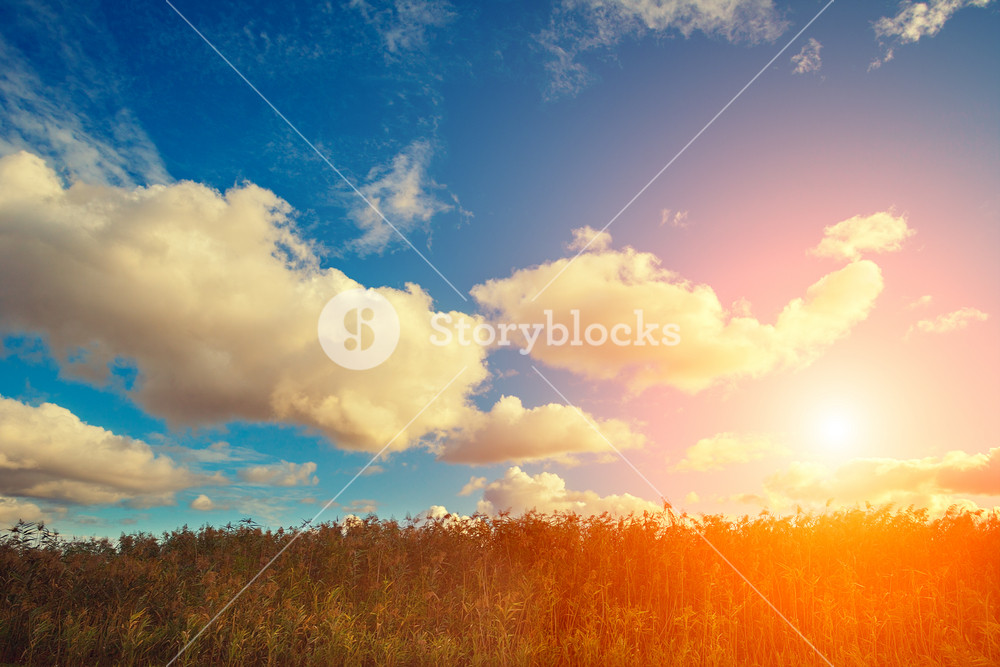 Sinrise over field with cloudy sky