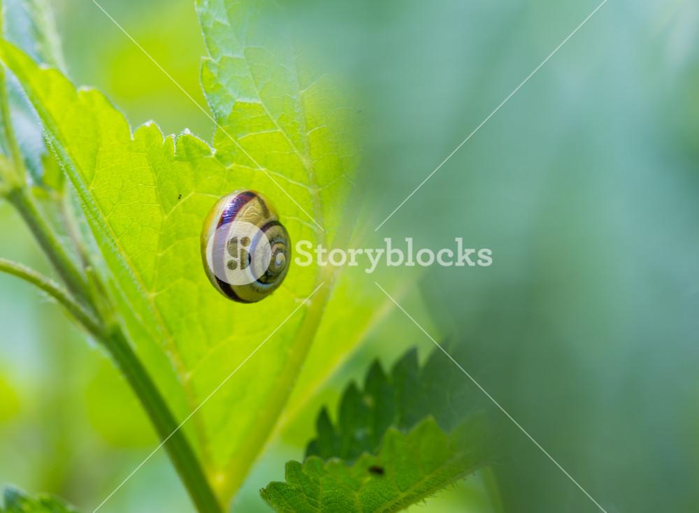 Snail shell on grass leaf. Beautiful nature macro