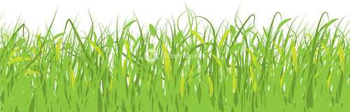 Spring Grass. Vector