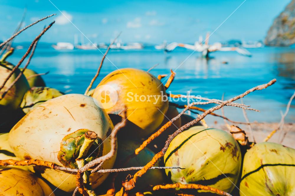 Close up of coconut fruits on the corong corong beach in El Nido, Palawan, Philippines