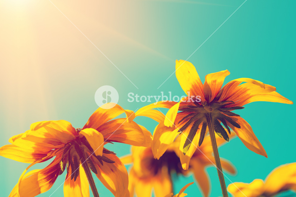Flowers in a garden against blue sky, bottom view