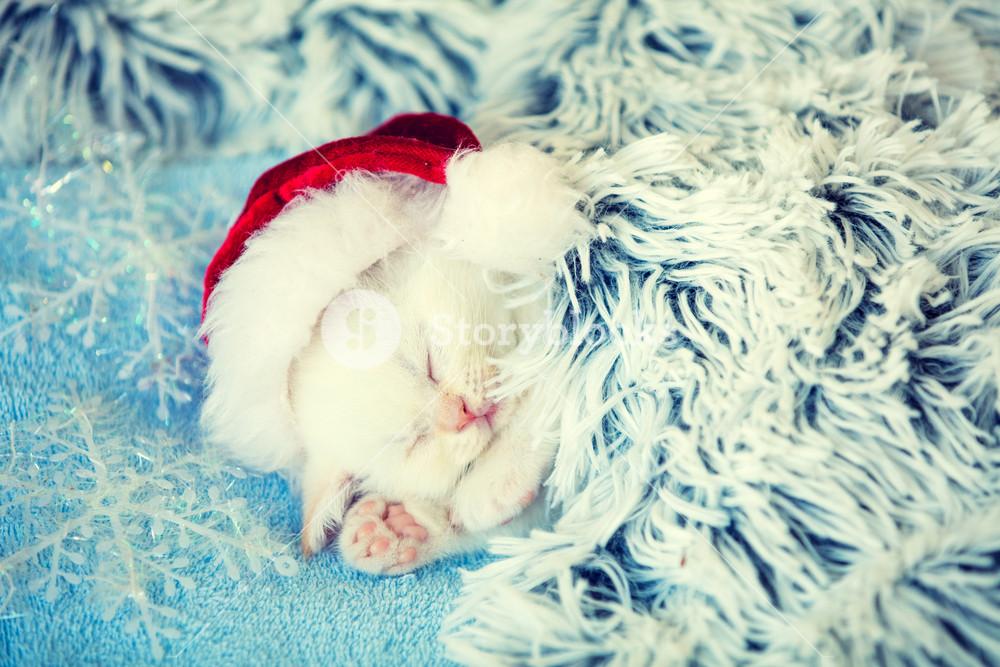 Sleeping cute little kitten wearing Santa hat lays on a fluffy blanket