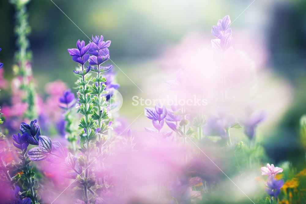soft pink meadow flowers on green natural field background