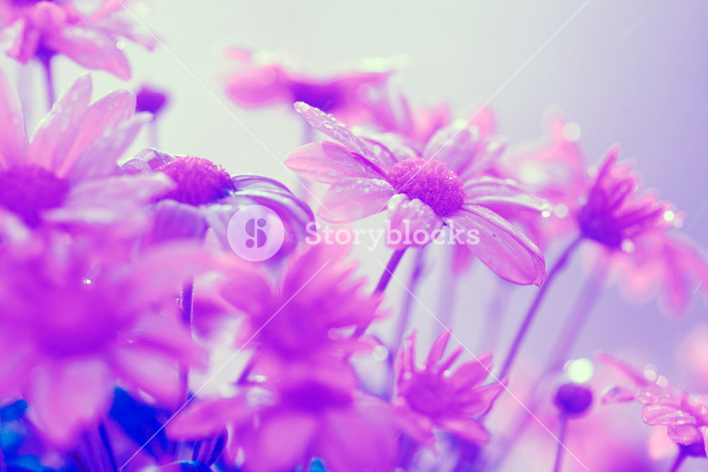 Vintage flower background. Flowers in a garden