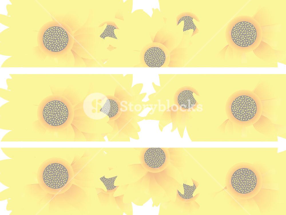 Sunflowers Header