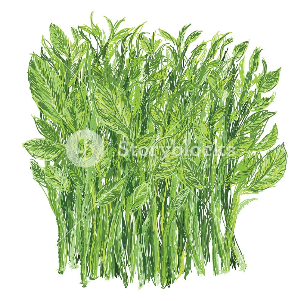 Sweet Leaf Bush