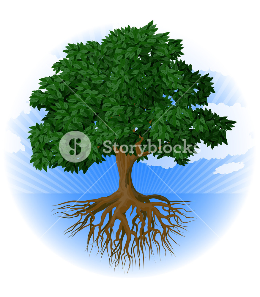 Tree With Roots. Vector.