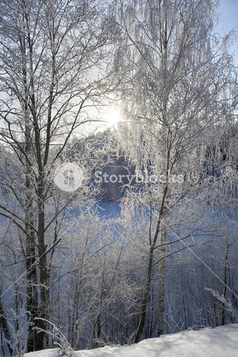 Trees and a frozen lake buried under heavy snowfall at dawn
