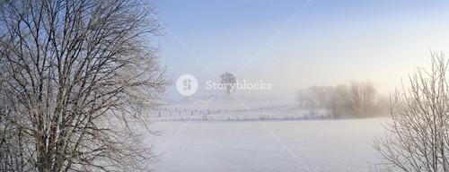 Trees and farmland buried under heavy snowfall at dawn