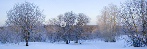 Trees in heavy snowfall under a blue sky