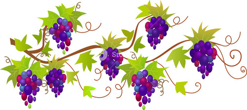 Vector Ornament With Grapes