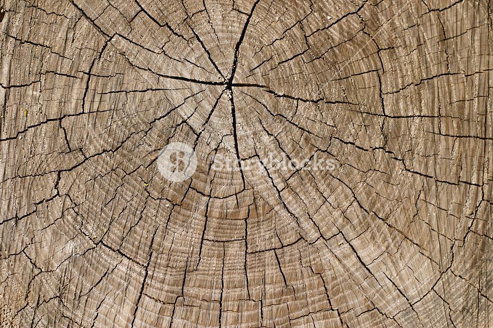 Wood Stumps 9 Texture