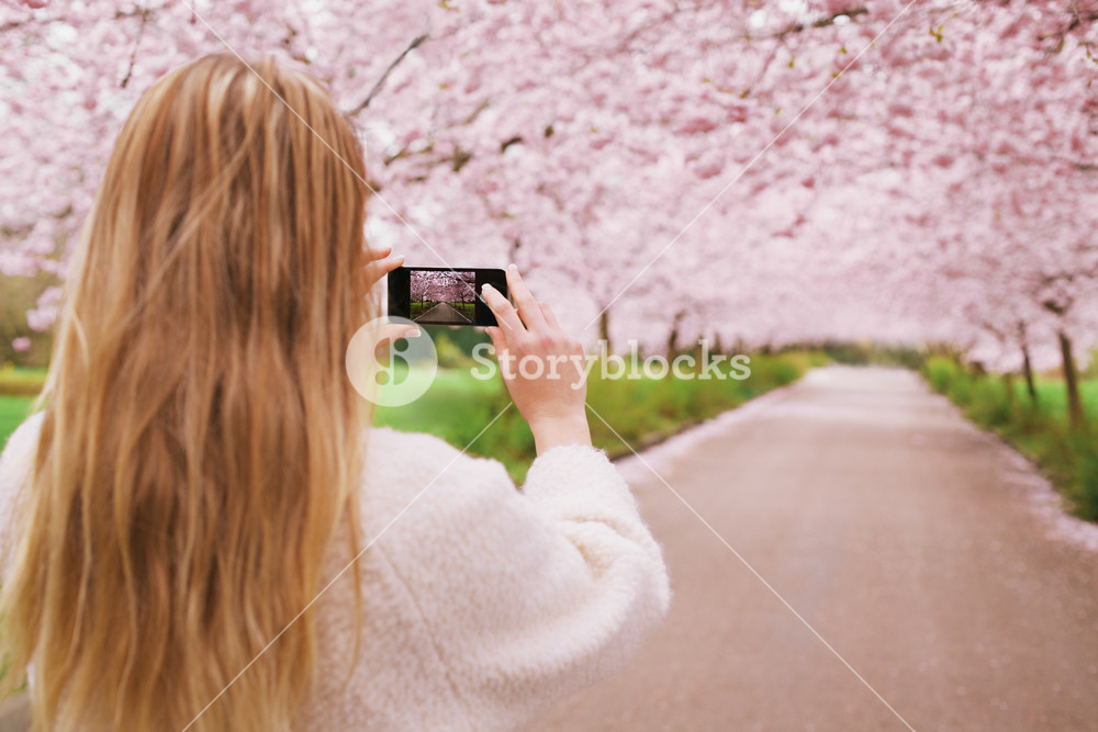 Young woman using her cell phone to capture images of the path and cherry blossoms tree at park. Rear view image of young female taking pictures with her mobile phone at spring blossom garden.